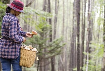 A woman hunting mushrooms in Nagano Prefecture of Japan.